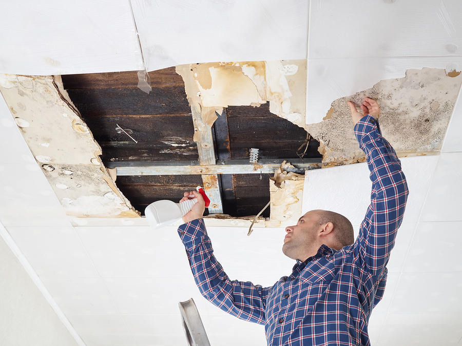 Keep your family safe by getting a mold inspection